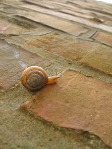 Free Snail Stock Image - 709901