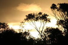 Free TREE-LINE SILHOUETTE SUNSET Stock Photography - 709902