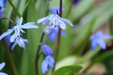 Free Bluebells Stock Images - 709934
