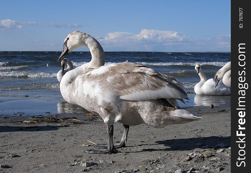 Graceful birds