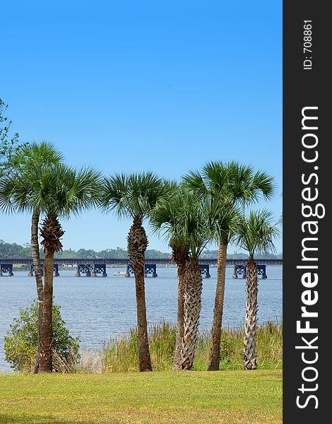 Palm Tree Riverbank