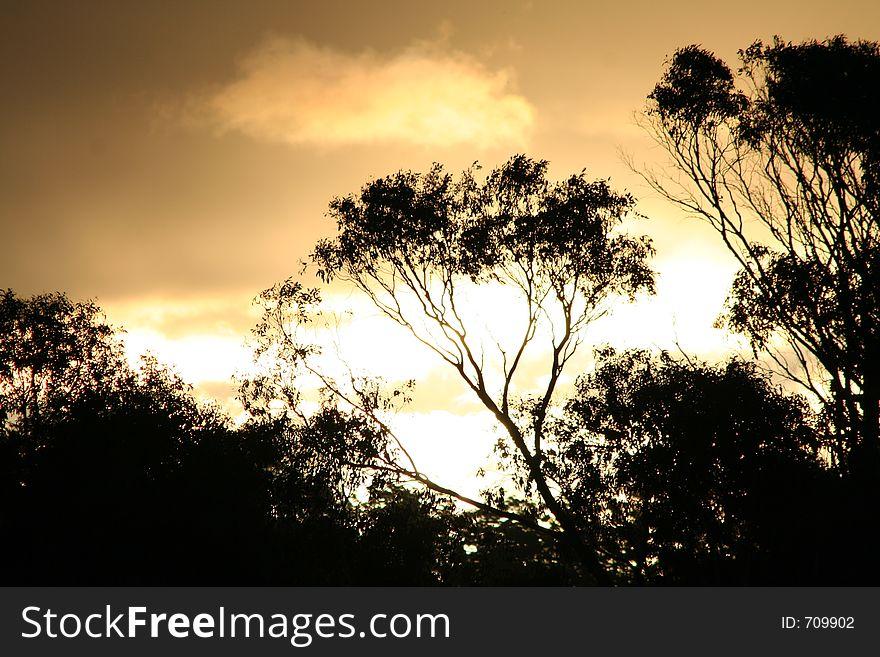 TREE-LINE SILHOUETTE SUNSET