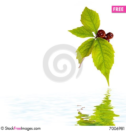 Free Leaf Of Wild Grape Stock Image - 7006981