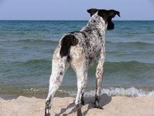 Free Dog Royalty Free Stock Photography - 7005627