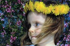 Free Dandelion Portrait Royalty Free Stock Images - 7008999