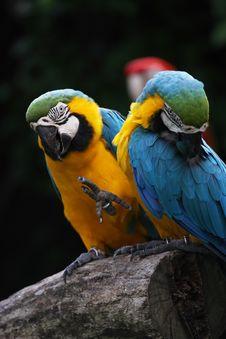 Free Parrot Stock Photo - 7009160