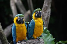 Free Parrot Stock Image - 7009231