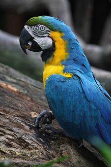 Free Parrot Stock Photos - 7009493