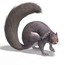 Free Squirrel 3D Render Stock Images - 7009574