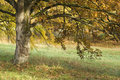 Free Smiling Tree In The Fall Royalty Free Stock Photography - 7012107