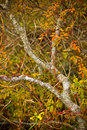 Free Tree With Orange And Yellow Leaves In Fall Stock Photography - 7016912