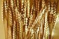 Free Detail Of Wheat Royalty Free Stock Photo - 7017255