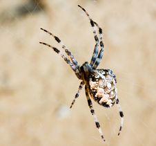 Free Spider Stock Image - 7010071