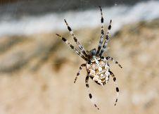 Free Spider Stock Photos - 7010133