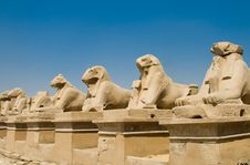 Free Sheep In Karnak Temple Stock Photo - 7011030