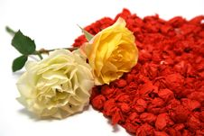 Free Yellow Roses Against Red Heart On Background Stock Photos - 7011773