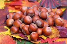 Free Nuts And Autumn Leaves. Stock Photography - 7011942
