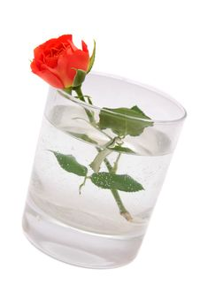 Free Red Rose In A Glass. Stock Photography - 7012012