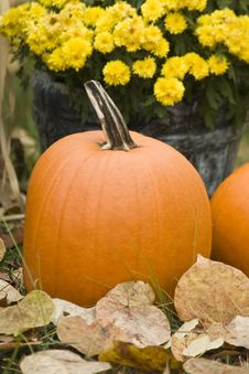Free Pumpkin Stock Images - 7012064