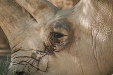 Free White Rhinoceros Stock Photos - 7014623