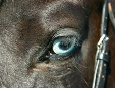 Free A Detail Of A Horse Eye Stock Photo - 7015030