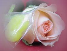 Free Soft Effect Of Candy And Rose Royalty Free Stock Photos - 7015098