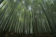 Free Bamboo Forest Stock Photos - 7015223