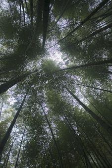 Free Bamboo And Sky Royalty Free Stock Photos - 7015228