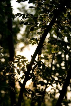 Free Branch In Sun Beams Stock Photos - 7015443
