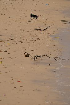 Free Dog At The Beach Royalty Free Stock Photography - 7016327