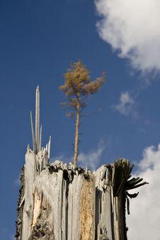 Free Broken Tree Stock Photography - 7016412