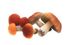 Pile Of Mushrooms. Stock Photos