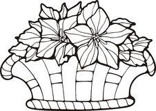 Free Floral Basket Stock Images - 7016684