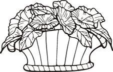 Free Floral Basket Royalty Free Stock Image - 7016686