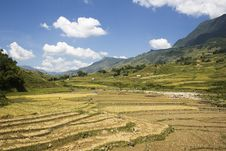 Free Rice Terraces Royalty Free Stock Photography - 7016867