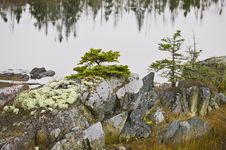 Free Marsh Ecosytem With Mossy Rocks And Trees Royalty Free Stock Image - 7016906