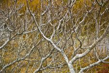 Free Empty Branches Twisted Together Royalty Free Stock Images - 7017009