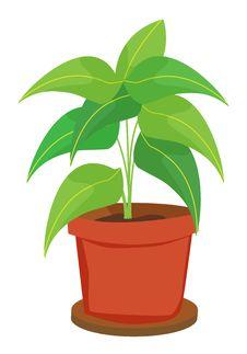 Free Pot Plant Stock Photography - 7017242