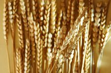 Free Detail Of Wheat Royalty Free Stock Photo - 7017255