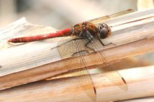 Free Dragonfly Stock Images - 7018234