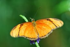 Free Beautiful Butterfly Royalty Free Stock Photography - 7018287