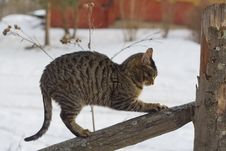 Free Cat On The Fence Royalty Free Stock Images - 7018999