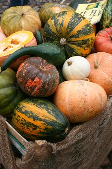 Free Pumpkins Stock Photos - 7019463