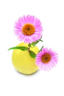 Free Daisies And An Apple. Royalty Free Stock Photo - 7019485