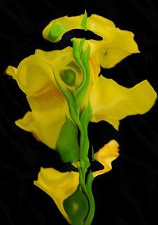 Free Gladiolus Stock Photos - 7019843