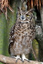 Free Standing Owl Stock Images - 7021514