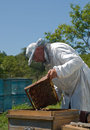 Free Beekeeper 39 Royalty Free Stock Photography - 7028317