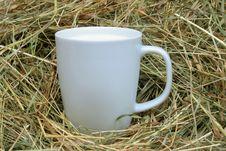 Free Fresh Milk. Stock Images - 7020624