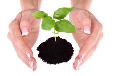 Free Hands Holding A Small Plant Stock Photos - 7020853