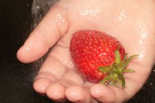 Free Closeup Of Strawberry In Hands. Stock Photos - 7020903